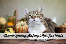 Holiday Cat Safety