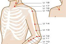 Acupuncture points <3