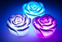 Flor com ledi