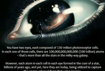 Science Fun Facts / by Kerry Faulkner