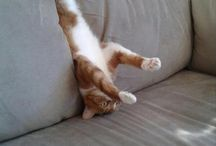 """Cute/Funny Animals / Pictures of animals that make you Laugh out Loud or make you go """"Awwww"""" / by Tommy Ferris"""