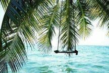 Palmen Meer