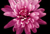 Art in bloom / Flowers in all their beaty