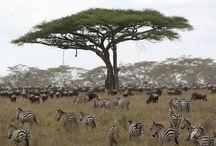 Jambo safari, Serengeti Tanzania
