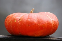 pumpkin patch / by Patricia Means Sittenauer