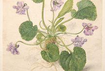 Watercolour drawings 1400 - 1700