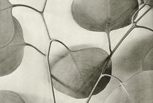 Leaves / There's something about leaves, and their skeleton of veins, their papery beauty that remind me of feathers