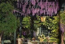 wisteria my fav