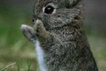 Cute and cuddly critters / A few of my fav pics from all around Pinterest, their all adorable and I hope you enjoy<3.