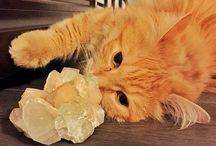 Crystals and Cute Animals