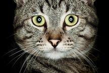 catcatcatcat<3