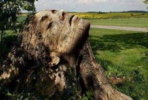 unbelievable tree and rock formations