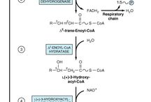 Beta oxidation and fatty acid synthesis