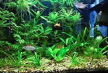 The natural planted tank.