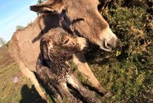 New Born Donkey / We absolutely love this time of year. This little chap is 15 minutes old! New born baby donkey.