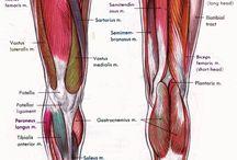 deporte piernas