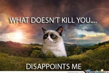 Humour - Grumpy Cat