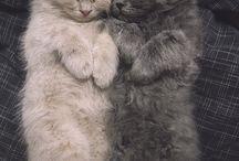 Cats♥