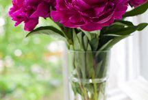 Пионы / Самые прекрасные цветы....