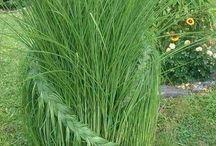 Braided grass