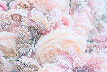 Flowers / Language of flowers