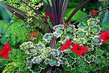 Landscaping/Garden / by Kris Collingwood Bottles