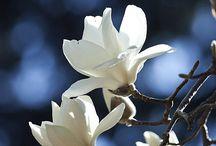 Красота / Восхищение природой и хорошей фотографией