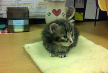 I love cats!