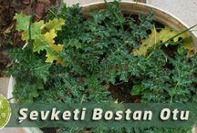 Yenilebilir bitkiler