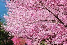 Spring♡♡♡