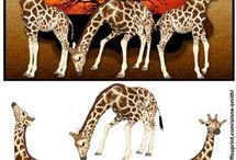 3D Affrikans dyr