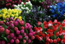 Színes tulipántok
