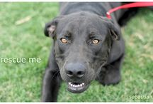 Adoptable Dogs / All of these dogs are available for adoption at Happy Day Humane Society in Big Spring, TX.
