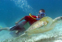 Fun in the Caribbean Sun / Caribbean Activities / by CheapCaribbean.com