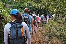 Levada Walks Madeira Island