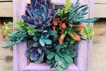 jardinería y terrarios / jardineria