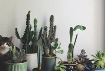 plants + gardens / by Wild Folk Studio