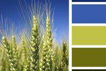 colours palettes