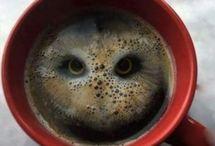 Coffee Truth