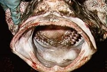 And People Wonder Why Fish Creep Me Out? / by Lynn Filliter