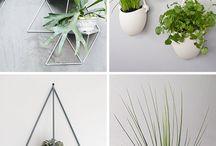 Trendy Indoor Plants