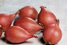 Organic Hybrid Seeds