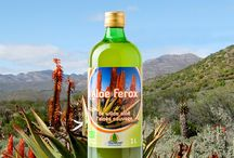 Aloe ferox / Contrary to Aloe vera that is mostly cultivated on farms, Aloe ferox grows wild in its natural habitat without fertilizers, pesticides or herbicides. An environment that is now also certified organic!