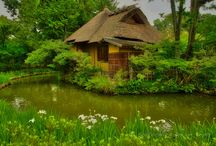 Shin'en Garden of Umenomiya Taisha in Kyoto! / The Shin'en Garden (東神苑) of Umenomiya Taisha (梅宮大社) in Kyoto, is famous for several types of irises, plum blossoms, double flowering cherry trees, camellia, azalea and hydrangea.