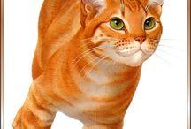 Cats all kinds / Katter i alle mulige fasonger
