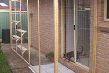 Sala para gatos