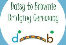 Daisy Bridging To Brownies