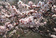 Весна. Цветение