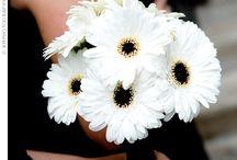 Wedding flowers / by Hannah Elizabeth