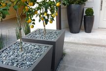 Citrus tree pots